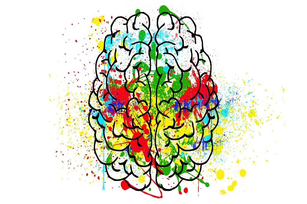cerveau dessiné coloré intelligence