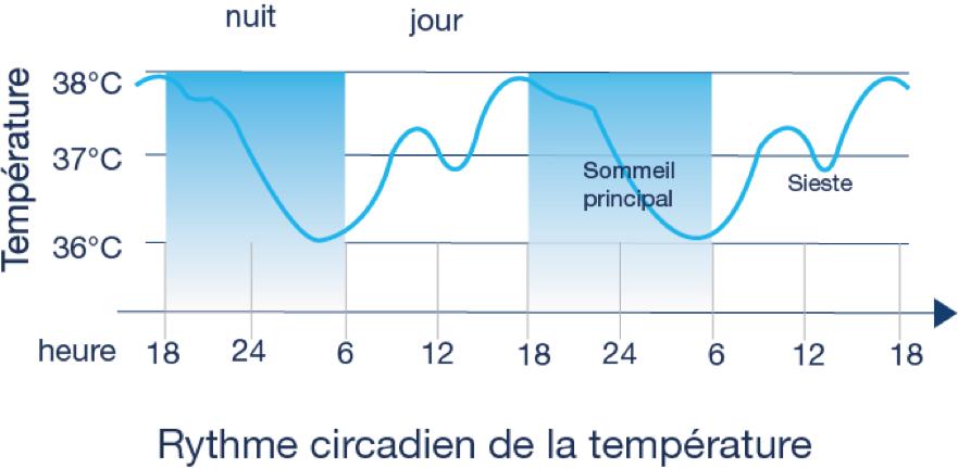 Graphique représentant le rythme circadien de la température corporelle
